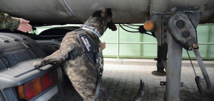 Artykuł: Psy służbowe Straży Granicznej mają dziś swoje święto