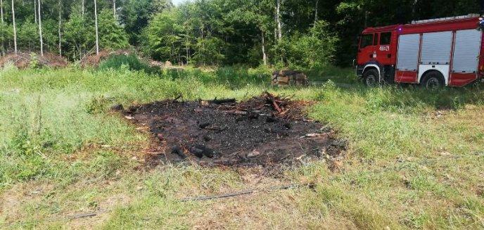 Artykuł: Szybka strażacka interwencja w lesie