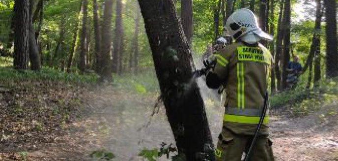 Artykuł: Pożar drzewa